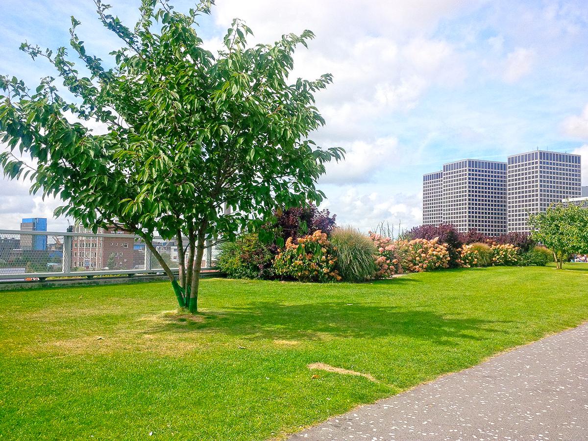 Dakpark in Rotterdam-West